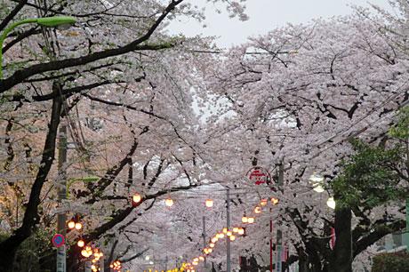2015_04_01_日大通り